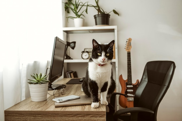 Gato de vista frontal caminando sobre un escritorio en el interior