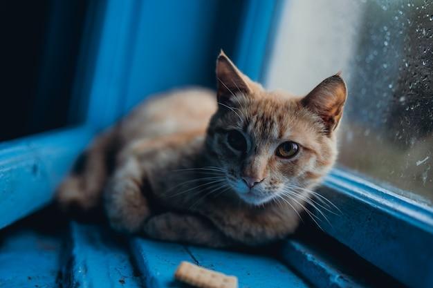 El gato yace en la ventana bajo la lluvia
