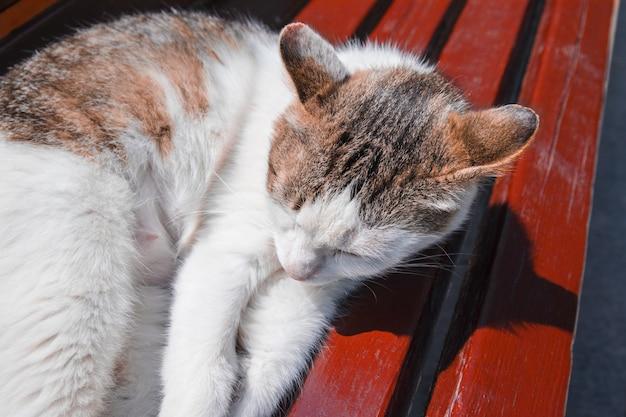 Gato de la yarda que duerme en un banco en la calle