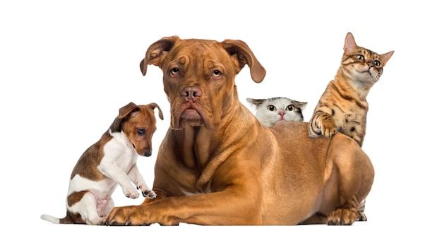 Gatos y cachorros jugando y escondiéndose detrás de un dogo de burdeos