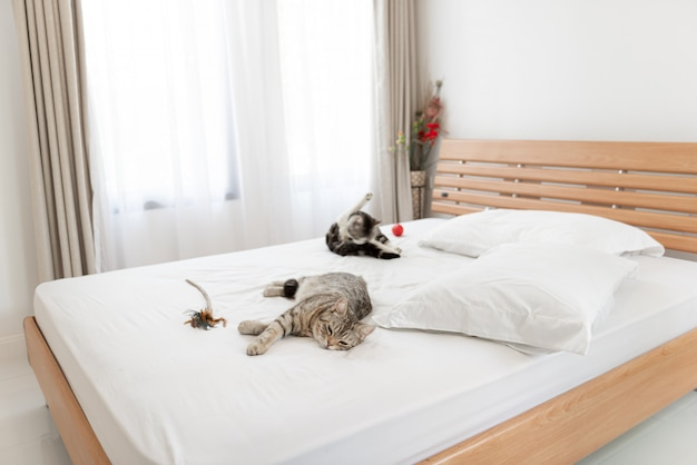 Gatos encantadores duermen en una acogedora cama blanca en el interior del dormitorio moderno