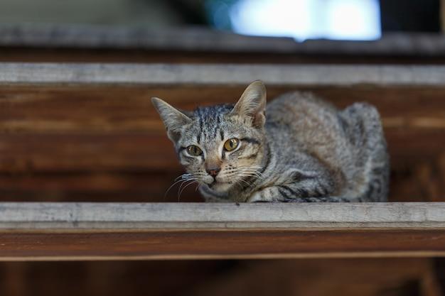 Gatos en las escaleras