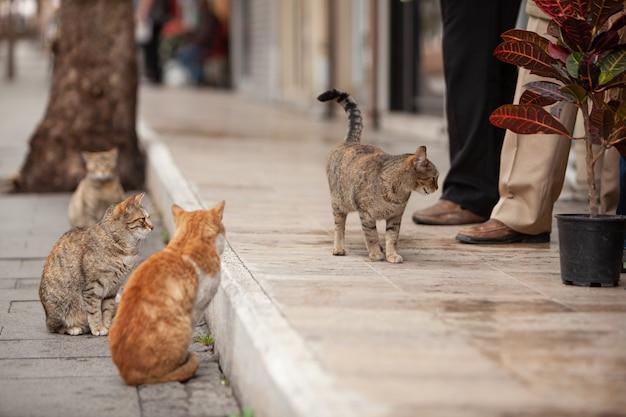 Gatos hambrientos sin hogar esperando comida de la gente
