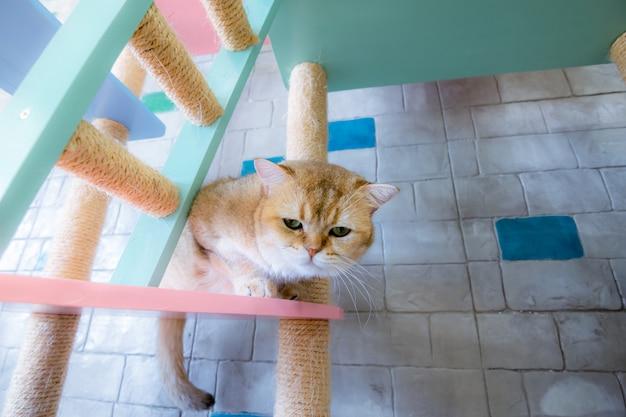 Gatos en una hermosa habitación y lindos gatos esponjosos
