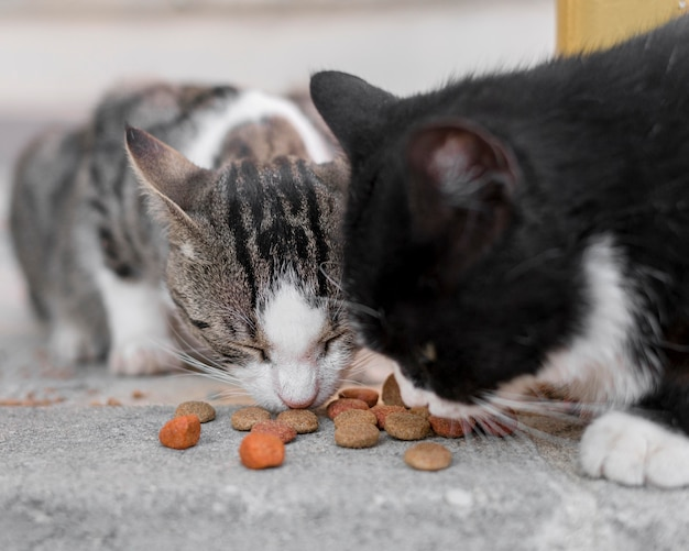 Gatos lindos comiendo juntos al aire libre