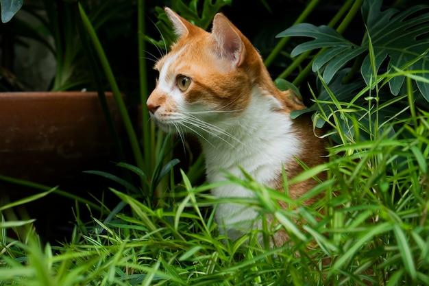 Gatos naranjas mirando algo en el jardín.