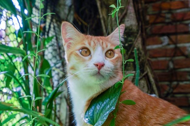 Los gatos se preguntan qué les espera y se ven lindos.