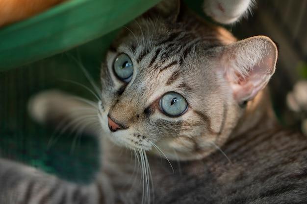Los gatos se ven muy lindos de esta manera.
