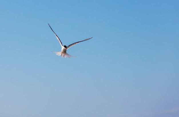 Gaviota en el cielo azul