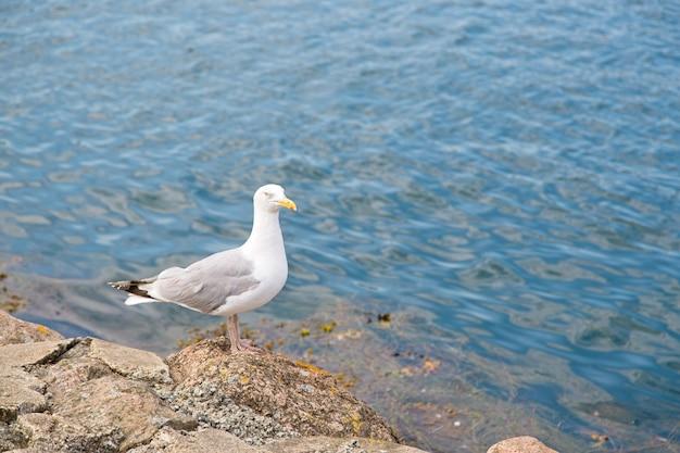 Gaviota donde se posan sobre las rocas en la orilla del mar durante el día