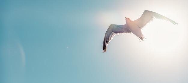 Gaviota volando en cielo abierto
