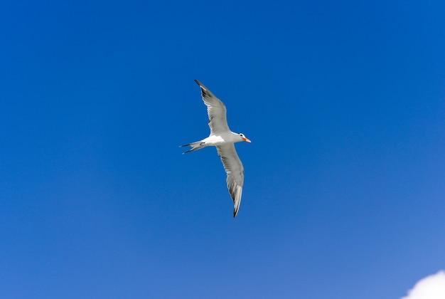 Gaviota volando bajo un cielo azul.