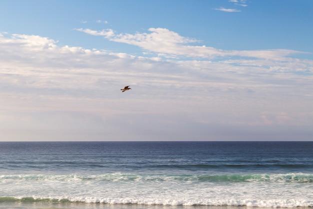Gaviota volando por el cielo