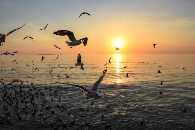 Gaviota volando y el océano en puesta de sol, paisaje, luz cálida