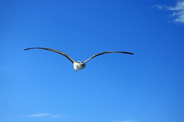 Gaviota volando en el vibrante cielo azul