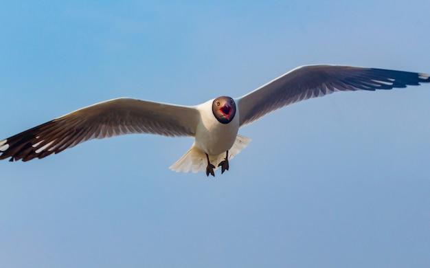 La gaviota vuela maravillosamente con un cielo azul en el fondo