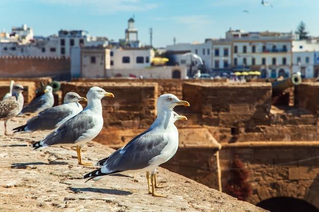 Gaviotas en el puerto de essaouira.