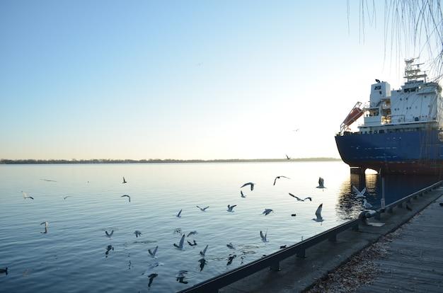 Gaviotas en la puesta de sol volando por la bahía del puerto de toronto con un barco