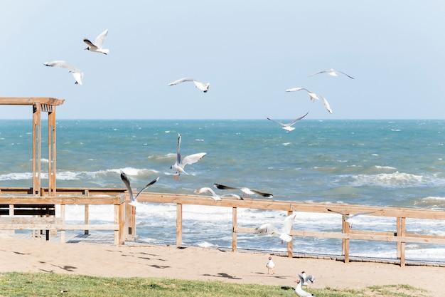 Gaviotas en el terraplén cerca del mar agitando