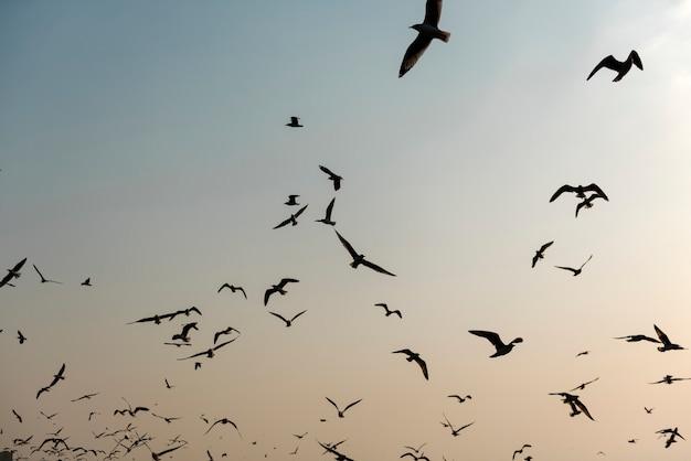 Gaviotas volando cerca del bosque de manglares natural