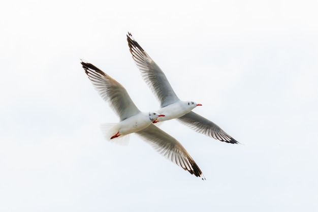 Gaviotas volando en el cielo