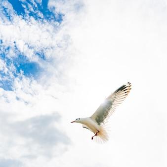 Gaviotas volando en playa tropical