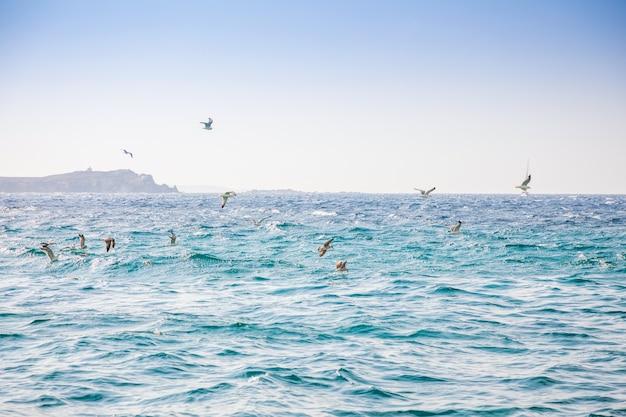 Gaviotas volando sobre el mar cerca de la isla de mykonos, grecia