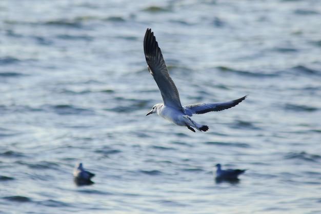 Las gaviotas vuelan sobre el mar, viven juntas en un grupo grande es un pájaro de los humedales a lo largo de la costa