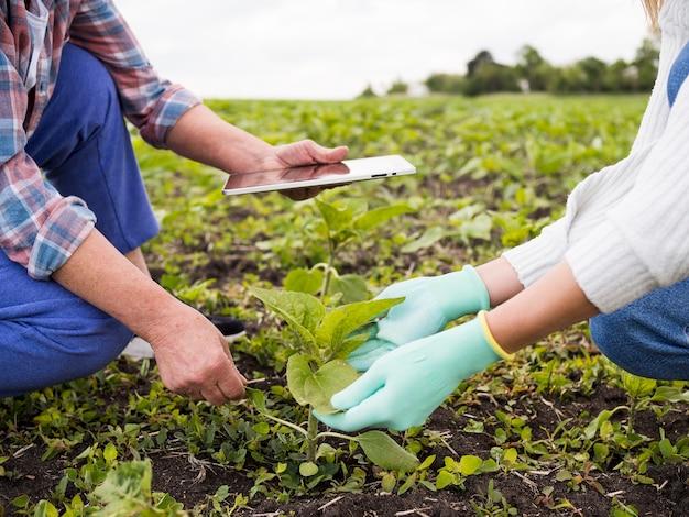 Gente, agricultura, juntos, primer plano