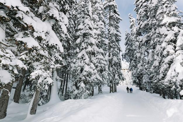 Gente en el bosque de pinos nevados