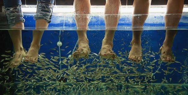 Gente haciendo masaje de spa de pescado de cerca en las piernas