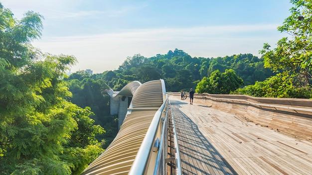 Gente en pasarela del puente de madera sobre campo del verde del árbol forestal.