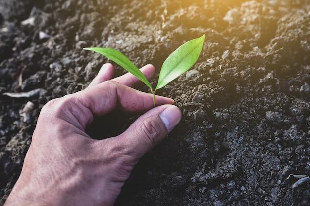 La gente está plantando árboles en el suelo.