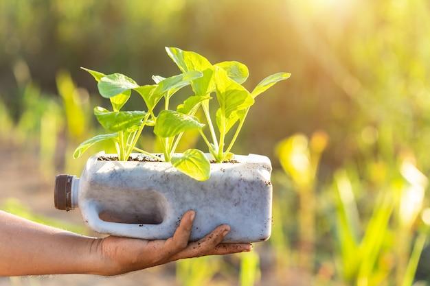 Gente plantando vegetales en botella de plástico.