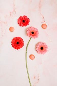 Gerbera flores con galletas en la mesa