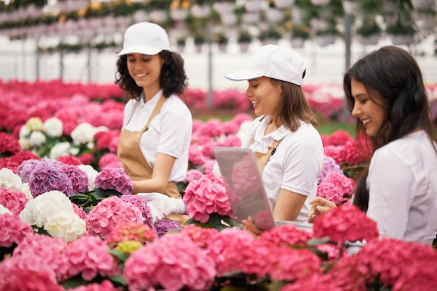Gerente femenina usando laptop mientras floristería plantar hortensias