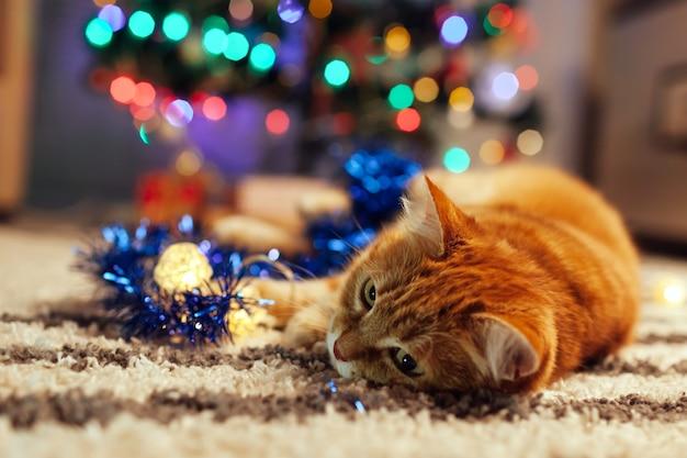 Ginger cat acostado bajo el árbol de navidad jugando con luces y oropel en casa año nuevo
