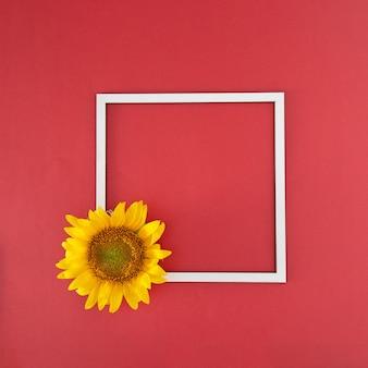 Girasol amarillo fresco y marco blanco sobre el fondo rojo audaz. arte abstracto. jungla virtual con espacio de copia