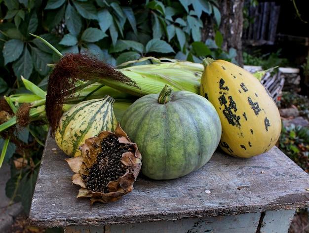 Girasol maíz jardín otoño