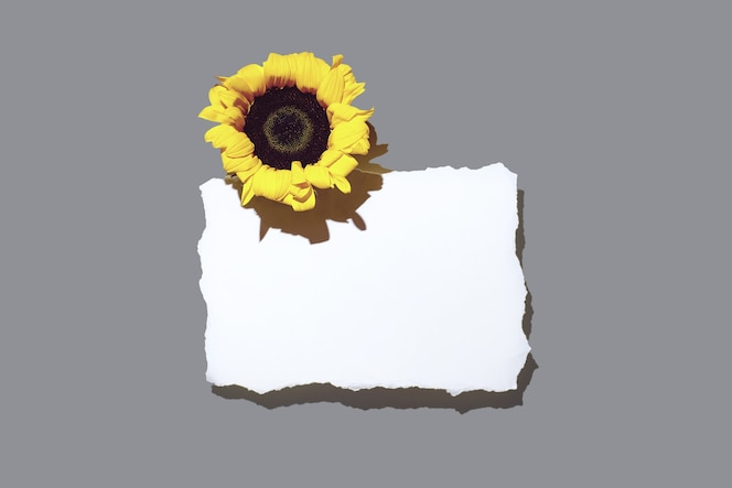 Girasoles y hoja de papel en blanco. con una sombra apretada sobre un fondo claro.