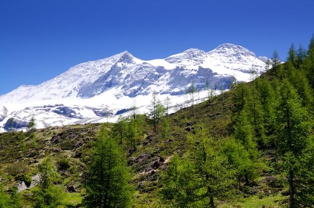 Glaciar de nieve rodeado de vegetación bajo la luz del sol y un cielo azul en suiza