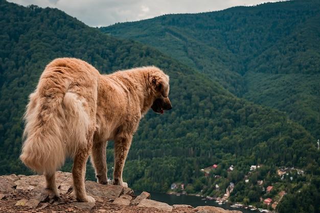 Golden retriever esponjoso marrón de pie sobre un acantilado rodeado de hermosa vegetación
