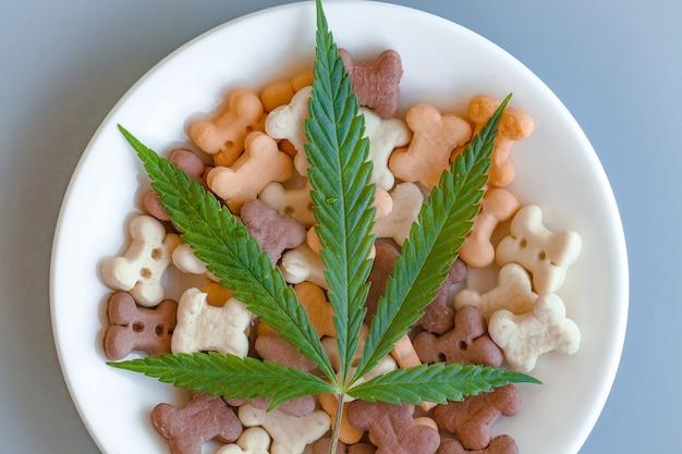 Golosinas para perros en plato blanco y hojas de cannabis - cbd y concepto de marihuana medicinal para mascotas