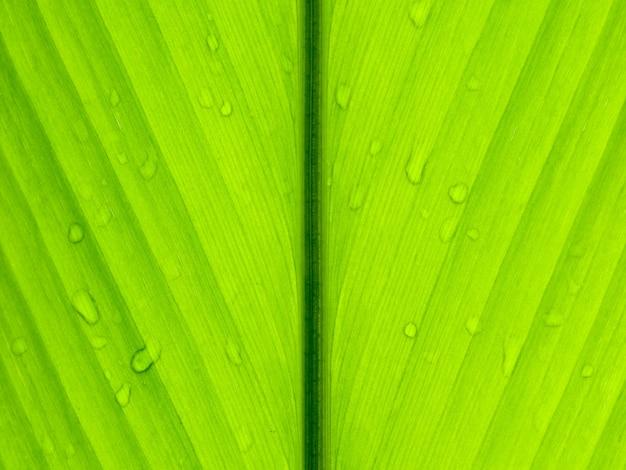Gota de agua sobre fondo de textura de hoja verde