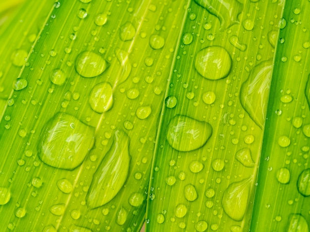 Gota de agua sobre hoja de palma verde