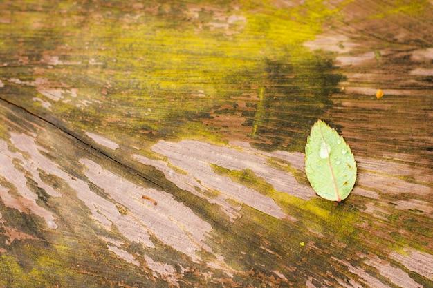 Gota de agua sobre la licencia verde, licencia verde sobre la madera, fondo de naturaleza