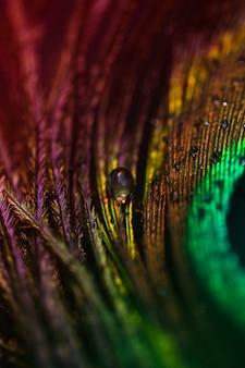 Gota de agua transparente blanca sobre el plumaje de pavo real.