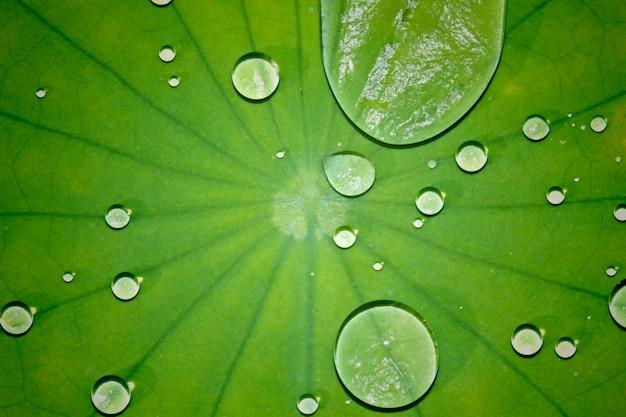 Gotas de agua con hoja es verde en la naturaleza.