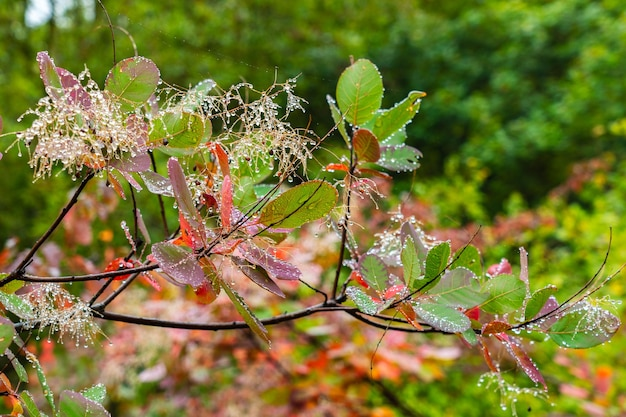 Gotas de agua en las hojas de los árboles