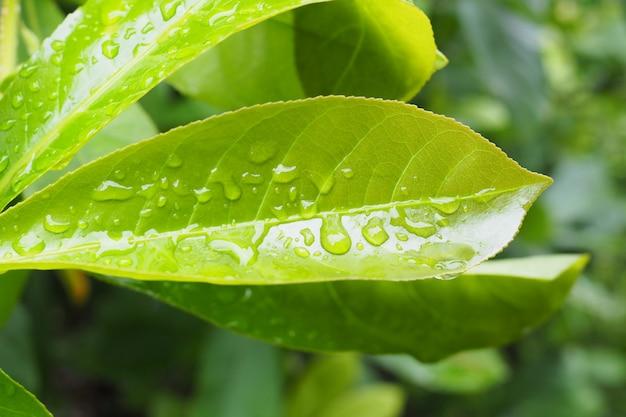 Gotas de agua sobre fondo de hoja verde